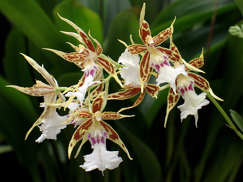 The Most Frequently Asked Questions About Orchid Plants
